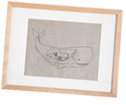 Framed Print of a Whale